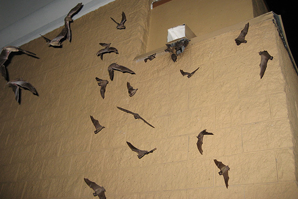 How To Keep Bats Away Bat Prevention Tips
