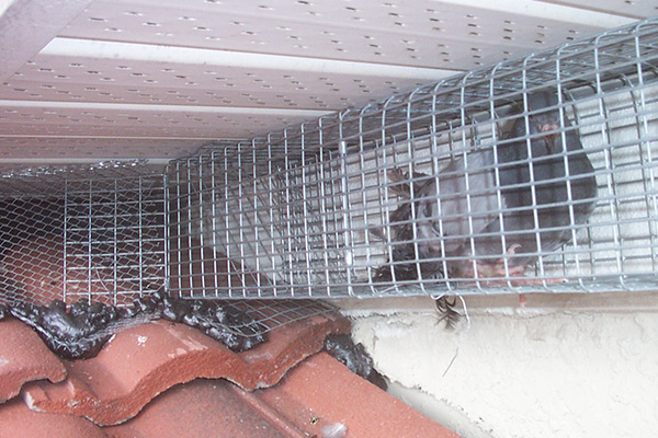 bird in the attic humane removal of birds in the attic of your house2 inspect the exterior of the home
