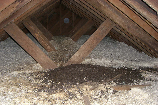 Buildup In The Attic