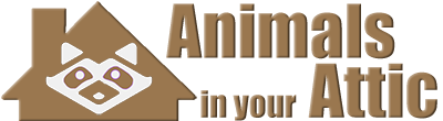 Animals in the Attic Home