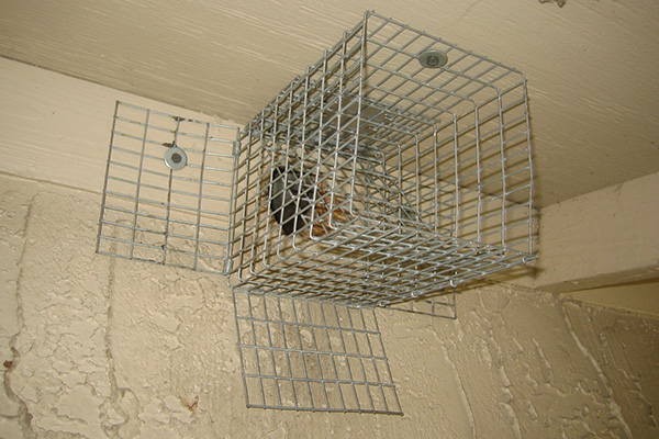 rear squirrel development and over when opens trap door under one of is removed way traps clip supply doors pin fields