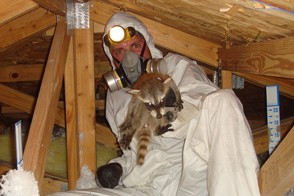 Critters In The Attic Syracuse Bat Removal New York Bat