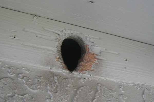 Repairs How To Fix Wildlife Entry Holes
